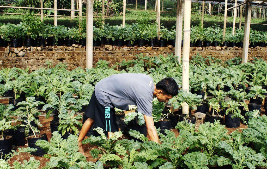 Rian Climint, Kebun Mbah Tani