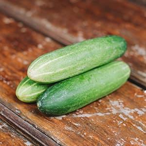 Cucumber SayurBox