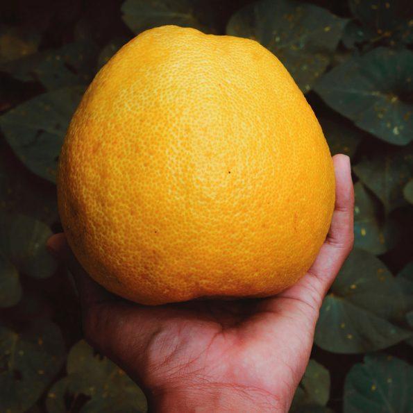 manfaat mengkonsumsi jeruk pamelo