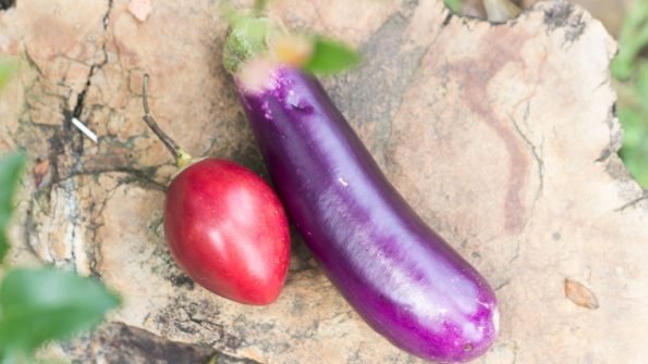 Perbedaan terong belanda dan terong ungu