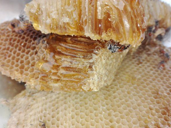 perbedaan madu asli dan palsu