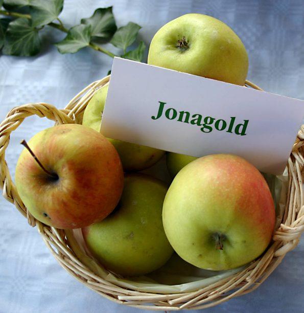 apel jonagold