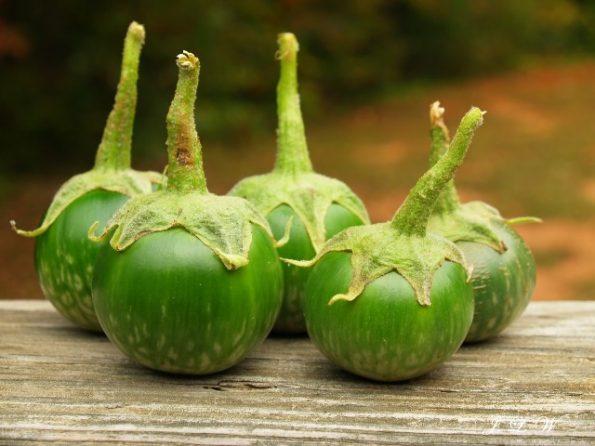 manfaat terong hijau