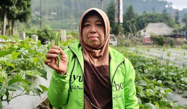 beli sayur online