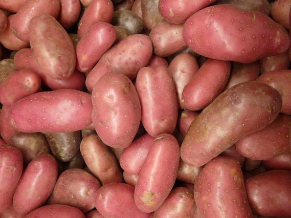 Perbedaan kentang merah